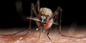 World Mosquito Day 2019: All you need to know about malaria