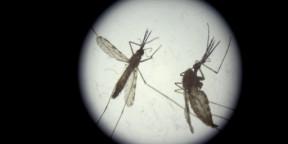 Oxford malaria vaccine 'game-changer'